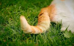 【斑斑马作品】在慵懒的午后相爱