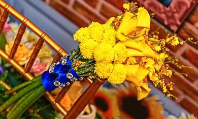 《阳光花园》----喜鄉繪婚礼策划