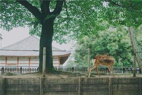 [日本]  奈良旅拍