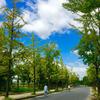 蜜月玩遍了日本 大阪东京奈良都超赞!